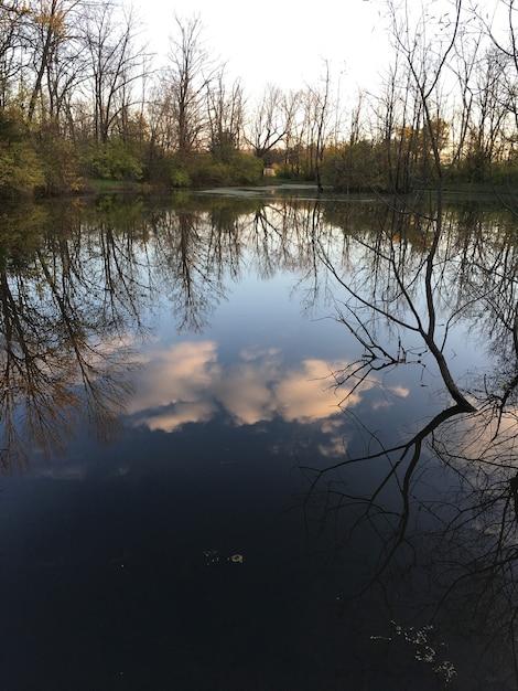Вертикальный снимок отражения деревьев и облачного неба в красивом спокойном озере Бесплатные Фотографии