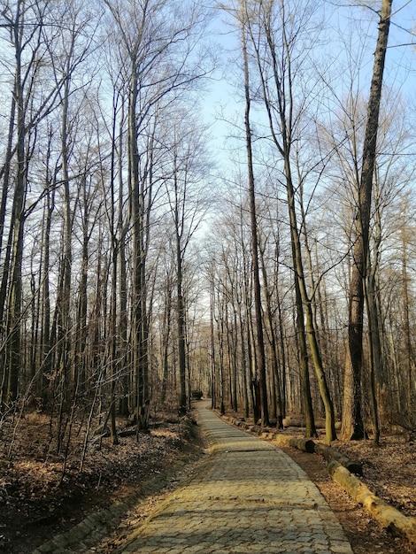 Вертикальный снимок дорожки в лесу еленя-гора, польша. Бесплатные Фотографии