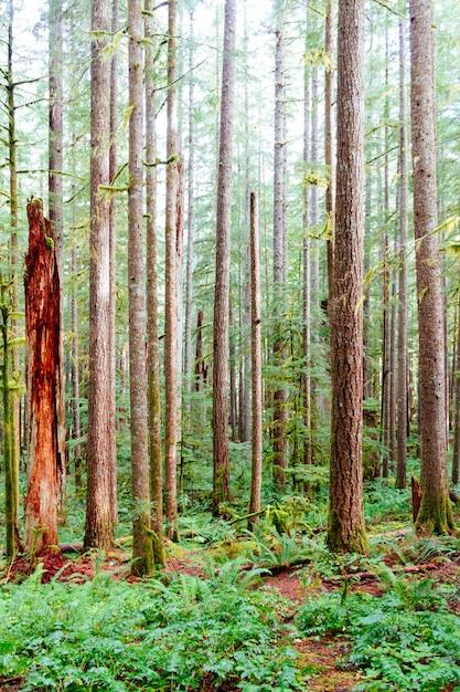 Вертикальный выстрел из тонких стволов деревьев, в окружении зеленой травы в лесу Бесплатные Фотографии