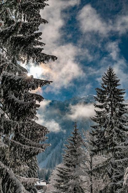 アルヘンティエーレの冬の青い曇り空の下で雪に覆われた木の垂直ショット 無料写真