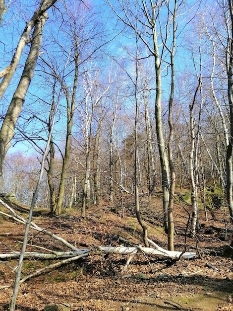 ポーランド、イェレニアゴラの森の木、葉、壊れた枝の垂直方向のショット 無料写真