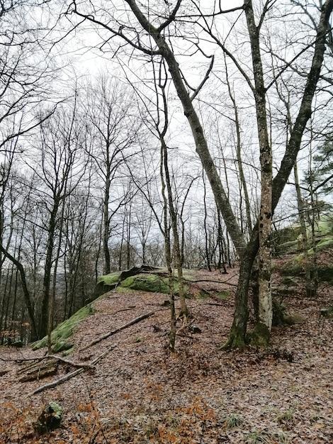 Вертикальный снимок деревьев посреди леса в ларвике, норвегия Бесплатные Фотографии