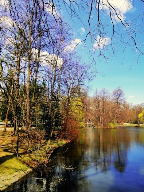 Вертикальный снимок деревьев рядом с прудом в еленя-гуре, польша. Бесплатные Фотографии