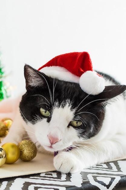 테이블에 장신구와 크리스마스 산타 클로스 모자와 흰색과 검은 색 고양이의 세로 샷 무료 사진