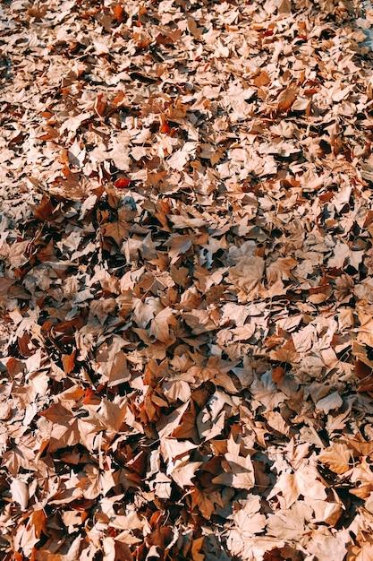 公園の真ん中に地面に黄色の紅葉の垂直ショット 無料写真