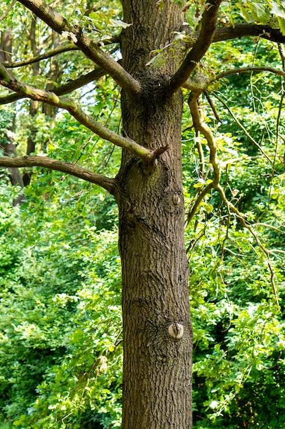 Colpo verticale di un vecchio albero con molti rami nella foresta Foto Gratuite