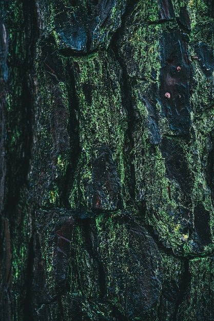 Vertical shot of a pine bark covered with moss Free Photo