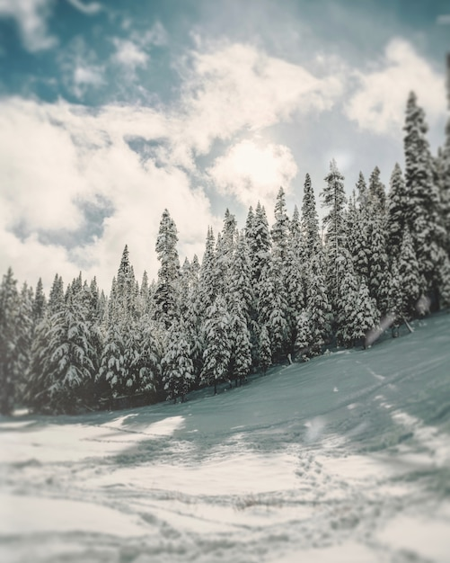 Vertical shot of pine trees on a hill covered in snow under a white cloudy sky Free Photo