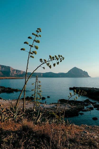 Vertical shot of plants growing on the shore near the sea with mountains and blue sky in background Free Photo