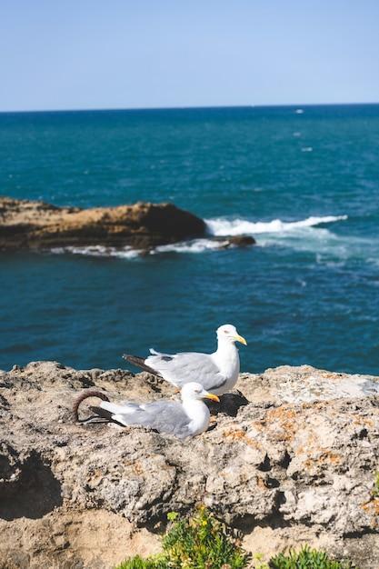 Vertical shot of seagulls near a sea Free Photo