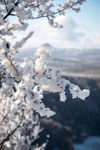 Vertical shot of a tree covered in snow, beautiful morning in the mountains Free Photo