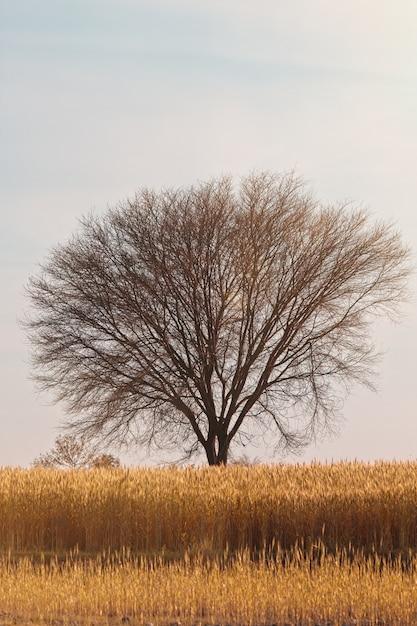 Colpo verticale di un albero nel mezzo di un campo coperto d'erba sotto il cielo blu Foto Gratuite