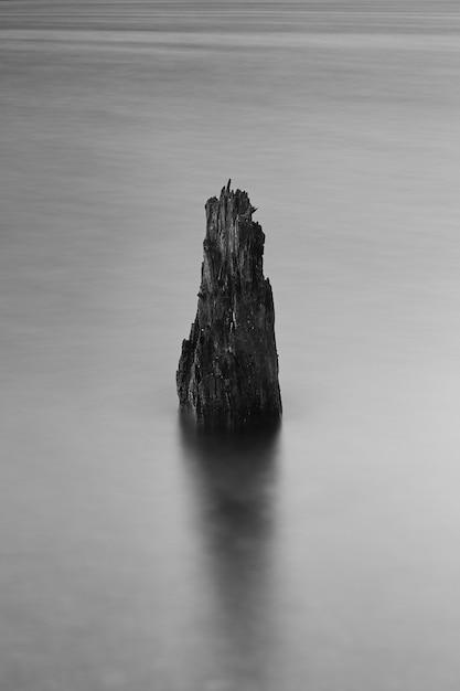 Colpo verticale della radice dell'albero nel mare ghiacciato coperto di nebbia Foto Gratuite