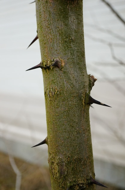 Vertical shot of a tree with sharp spikes on its surface Free Photo