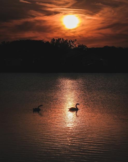 Un colpo verticale di due oche in acqua e una silhouette di montagne Foto Gratuite