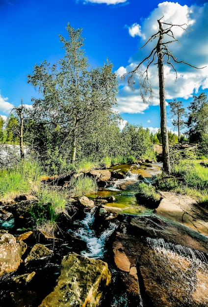 Vertical shot of a water stream flowing in the middle of the rocks surrounded by nature in sweden Free Photo