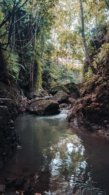 Colpo verticale di un ruscello d'acqua nel mezzo della foresta con alberi verdi Foto Gratuite