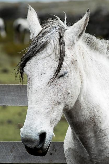 Colpo verticale di un cavallo mustang bianco con gli occhi chiusi Foto Gratuite
