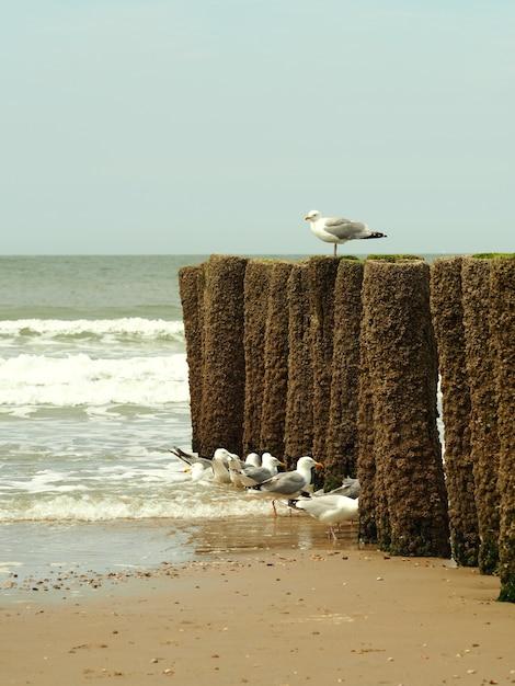 Colpo verticale di gabbiani bianchi su una spiaggia di sabbia dorata con un cielo blu chiaro Foto Gratuite