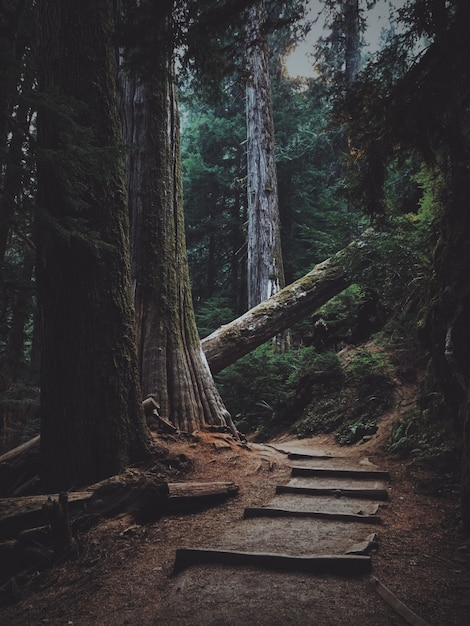 Vertical shot of wooden stairs in the forest blocked by a fallen tree Free Photo