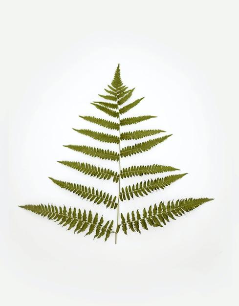 白い背景の上の緑の植物の垂直方向のビュー 無料写真