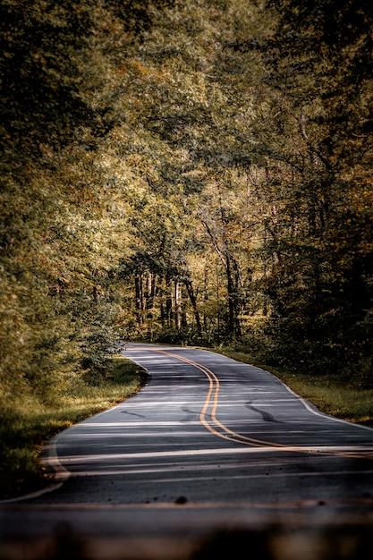 Вертикальный вид дороги в окружении осеннего леса Бесплатные Фотографии