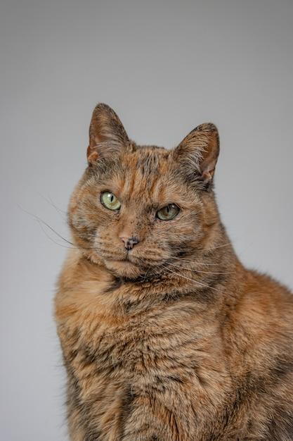 オレンジ色の不機嫌そうな猫の垂直方向のビュー 無料写真