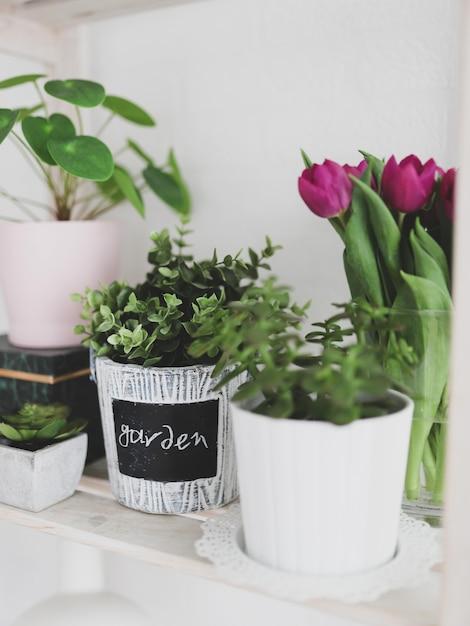 鉢やチューリップの植物の垂直方向のビュー 無料写真