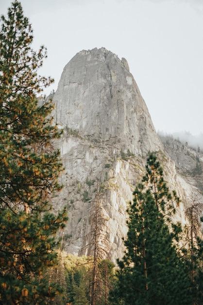 Vista verticale di alberi ad alto fusto e montagna rocciosa con un cielo grigio in background Foto Gratuite