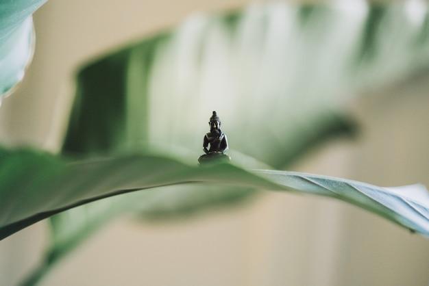 Очень маленькая статуя будды на большом листе растения Бесплатные Фотографии