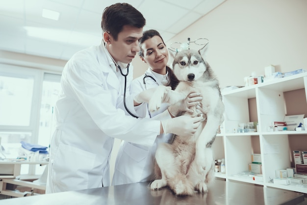 Veterinarian cardiology checking dog heartbeat Premium Photo