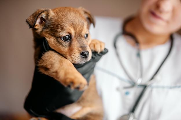 Ветеринар осматривает щенка в больнице. маленькая собака заболела. щенок в  руках ветеринара. | Премиум Фото
