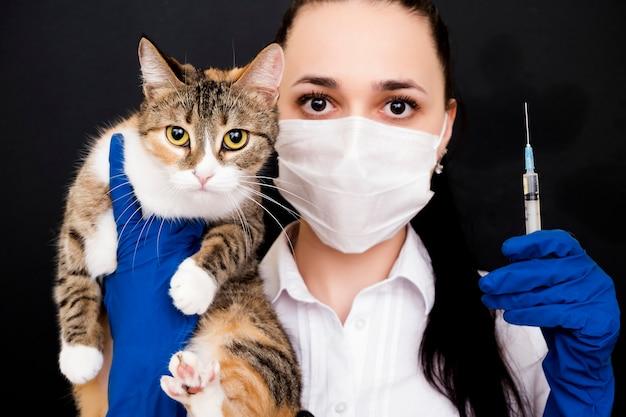 Ветеринар держит кота в руках. вакцинация кошек. лечение для кошек. консультация с врачом. Premium Фотографии