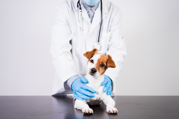 Veterinarian man working on clinic with cute small jack russell dog. Premium Photo