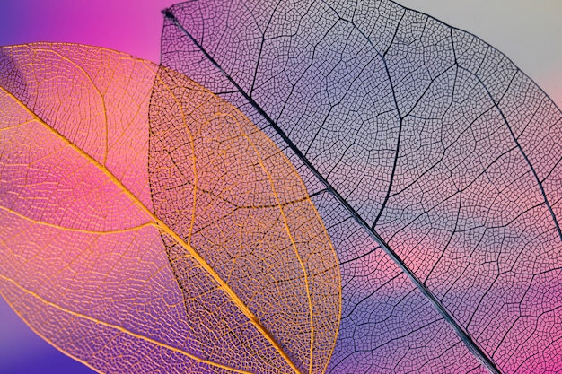 Vibrant abstract colored fall leaves Free Photo