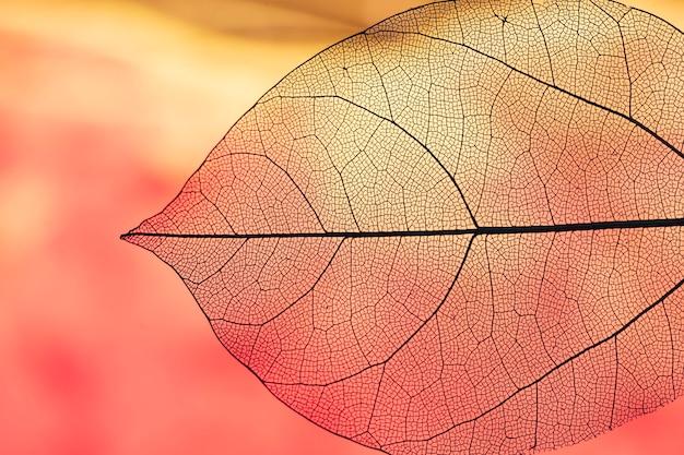 Vibrant transparent orange autumn leaf Free Photo
