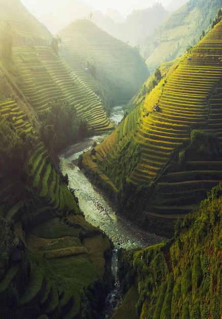 Vietnam rice terraced Premium Photo