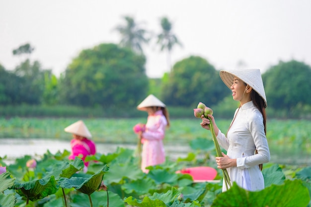 Vietnamese women are collecting the lotus at sunset. Premium Photo