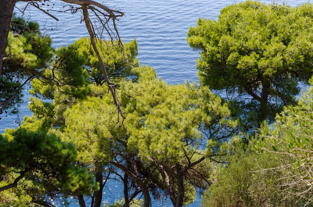 View of the adriatic sea from above through green foliage Premium Photo