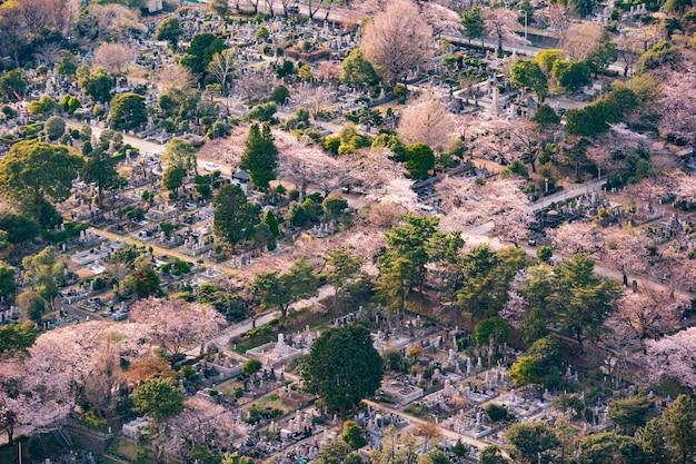 View of aoyama cemetery in tokyo, japan Premium Photo