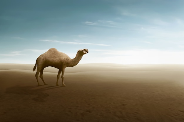 View of camel on the desert dunes Premium Photo