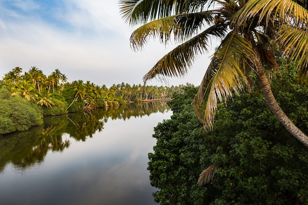 View of canal on sunset. kerala state, south india Premium Photo