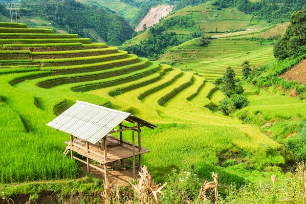 View of cottage on rice field terraced Premium Photo