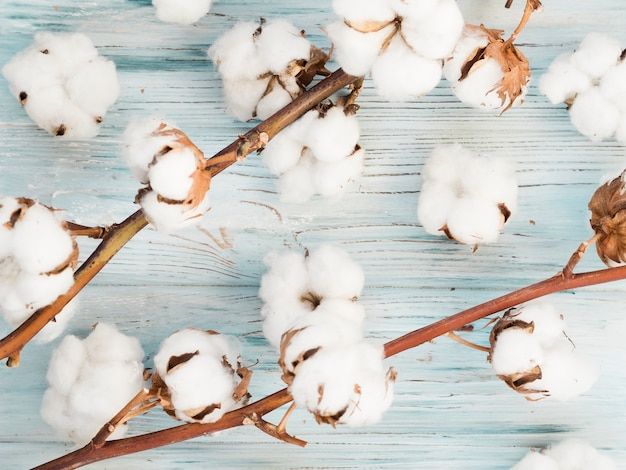 Above view cotton flowers on wooden background Premium Photo