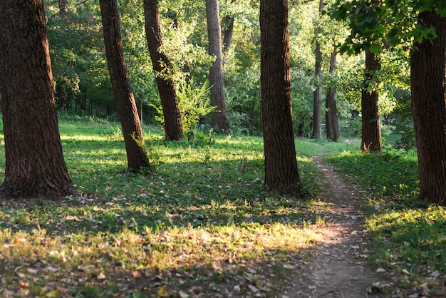 View of a empty walking trail in green forest Premium Photo