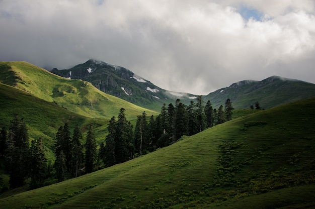 View of the green hills under the clouds with evergreen trees in the middle Premium Photo