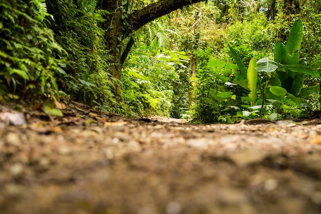 View of green rainforest during rainy season Free Photo