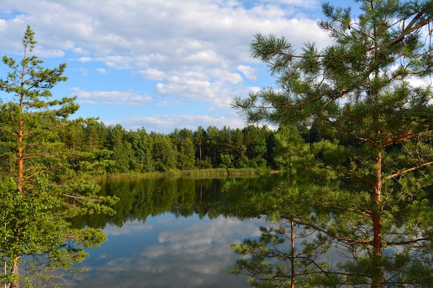 View of the lake through pine branches. blue lakes in chernihiv region, ukraine Premium Photo