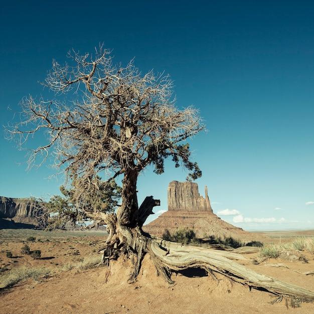 Veduta della monument valley e dell'albero con speciale elaborazione fotografica Foto Gratuite
