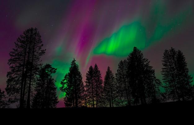 夜空の森の眺め Premium写真